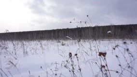 Hiver field Forêt à l'arrière-plan Appareil-photo de mouvement banque de vidéos