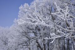Hiver Forest Hoarfrost image stock