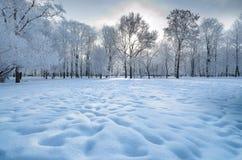 Hiver froid dans les bois images stock