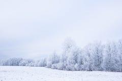 Hiver froid glacial dans le bois et la terre givrés de forêt Les températures de gel en nature Environnement naturel de Milou photographie stock