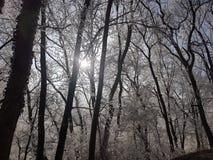 Hiver gelé d'arbres - Suisse Photographie stock