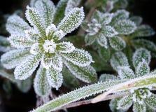 Hiver givre. Vert nature green naturel landscape macro natural Stock Image