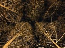 Hiver la nuit images libres de droits