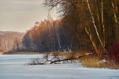 Hiver - lac congelé, Rogoznik, Pologne image libre de droits