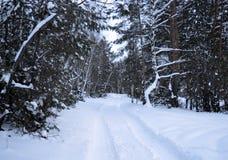 Hiver, neige, forêt, arbre, froid, nature, arbres, paysage, blanc, bouleau, gel, bois, glace, bois, saison, parc, ciel, neigeux,  photographie stock libre de droits
