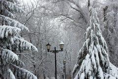 Hiver, neige, nature, paysage, parc, lumières, blanc, noires image stock