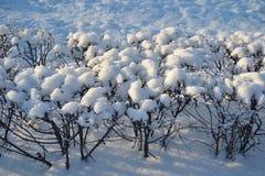 Hiver, neige sur les branches blanches et bleues Images stock