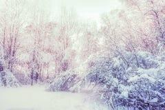 Hiver nordique rêveur Forest With Snow images stock