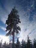 Hiver, nouvelle année Photographie stock