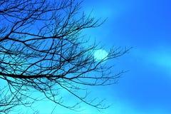 Hiver Sun passant par des nuages derrière les arbres nus Image libre de droits