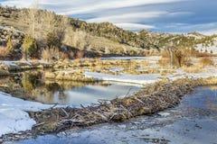Hiver sur le marais de castor Photographie stock libre de droits