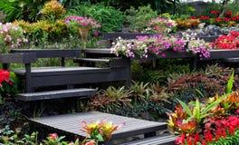 Hiver Thaïlande de fleur Photographie stock libre de droits