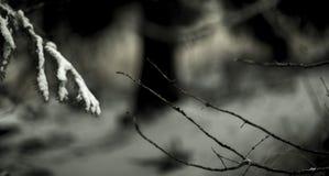 Hiver transitioning dans l'automne photographie stock