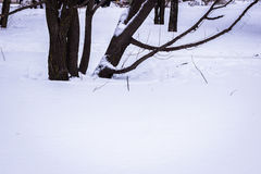 Hiver, un arbre dans la neige blanche Image libre de droits