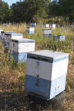 Hives 1. Behives distributed through a meadow in Crete Royalty Free Stock Photos