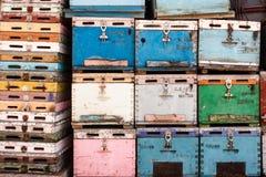 Hives Stock Photos