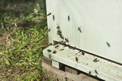 Hives in an apiary with bees flyin Stock Photo