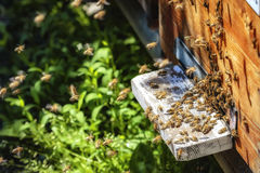 Hives in an apiary with bees flying to the landing boards in a g Stock Photography