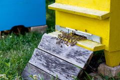 Hives in the apiary Stock Photo