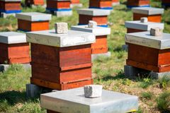 Hives in the apiary Stock Photos