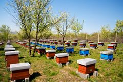 Hives in the apiary Royalty Free Stock Images