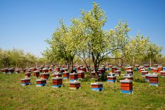 Hives in the apiary Stock Photography