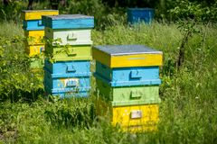 Hives in the apiary. Selective focus Stock Images