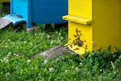 Hives in the apiary Royalty Free Stock Photography