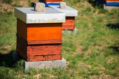 Hives in the apiary Stock Image