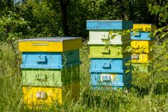 Hives in the apiary. Selective focus Royalty Free Stock Image
