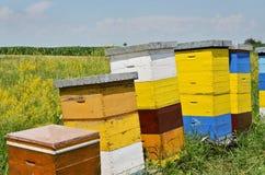 Hives Royalty Free Stock Image