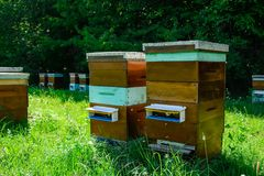Hives of bees in the apiary. Apiculture. Royalty Free Stock Photos
