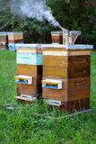 Hives of bees in the apiary. Apiculture. Stock Images