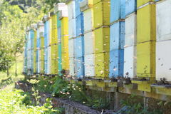 Hives with bees. Hives with hired bees. In hot days a lot of bee are outside on enter of hives Stock Images