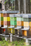 Hives with bees Stock Photography