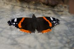 Hives butterfly are sitting on the light iron box. ÑŽ royalty free stock photos