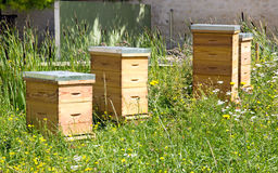 Hives in the city in a green area. Royalty Free Stock Photography