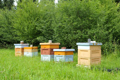 Hives Stock Images