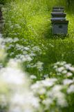 Hives in the garden. Group of bee hives in a green, early summer garden stock image