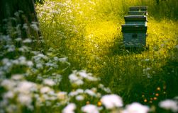 Hives in the garden. Group of bee hives in a green, early summer garden royalty free stock photos