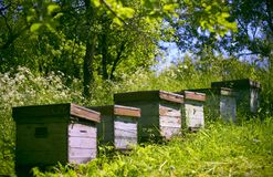 Hives in the garden. Group of bee hives in a green, early summer garden stock photography