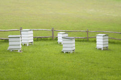 Hives in green meadow Stock Photography