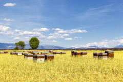 Hives with many bees in flight Royalty Free Stock Photography