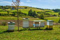 Hives in the meadow Royalty Free Stock Photo