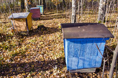 Hives in the october forest Stock Photos