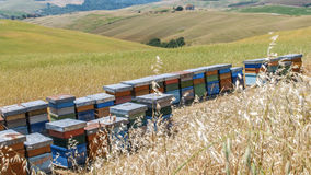 Hives in the tuscan countryside Royalty Free Stock Photography