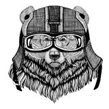 Hjälm för motorcykel för stor lös björn för grisslybjörn bärande, flygarehjälmillustration för t-skjortan, lapp, logo, emblem arkivbilder