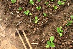Hjälpmedel- och landgrönsaker Royaltyfri Fotografi