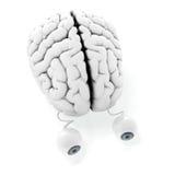 hjärnögon Royaltyfri Bild