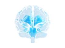 hjärna Arkivbilder